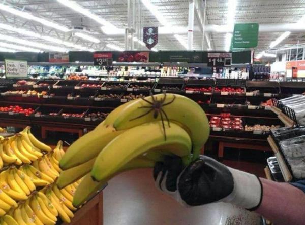 тарантул в бананах