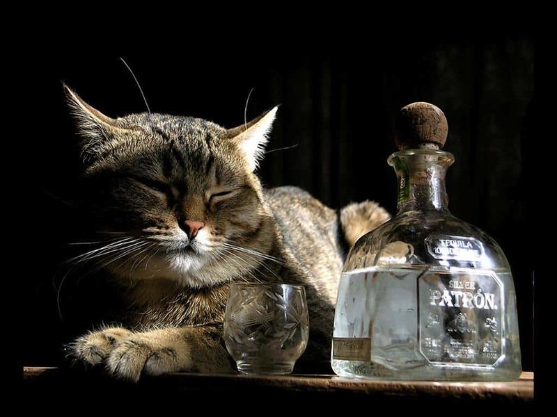 кошка водка