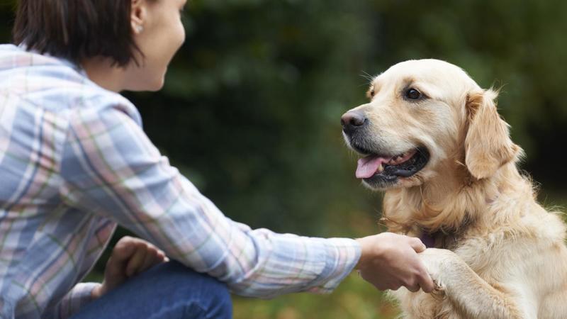 собака хозяин