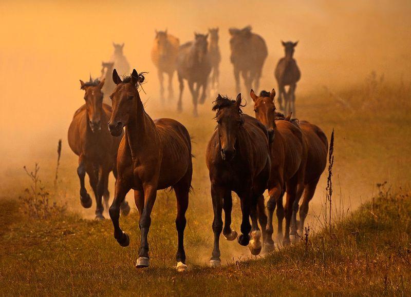 Лошадки на миллион: в Забайкалье задержали подозреваемых в краже 56 коней