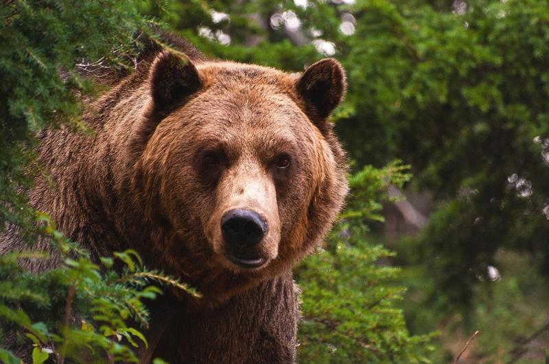 бурый медведь склад