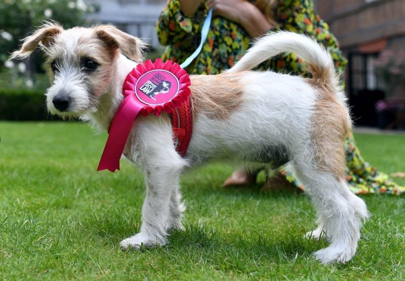 Великобритания: щенок обустраивается в резиденции премьер-министра