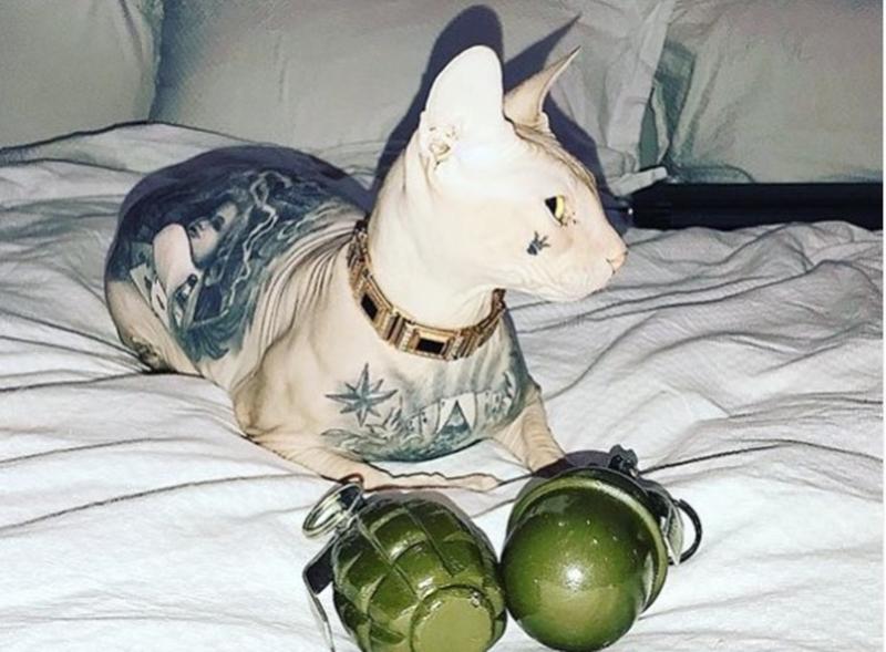«На груди — татуировка»: у известного блогера пропал кот