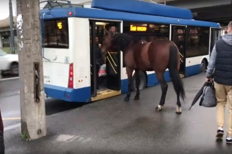лошадь троллейбус петербург