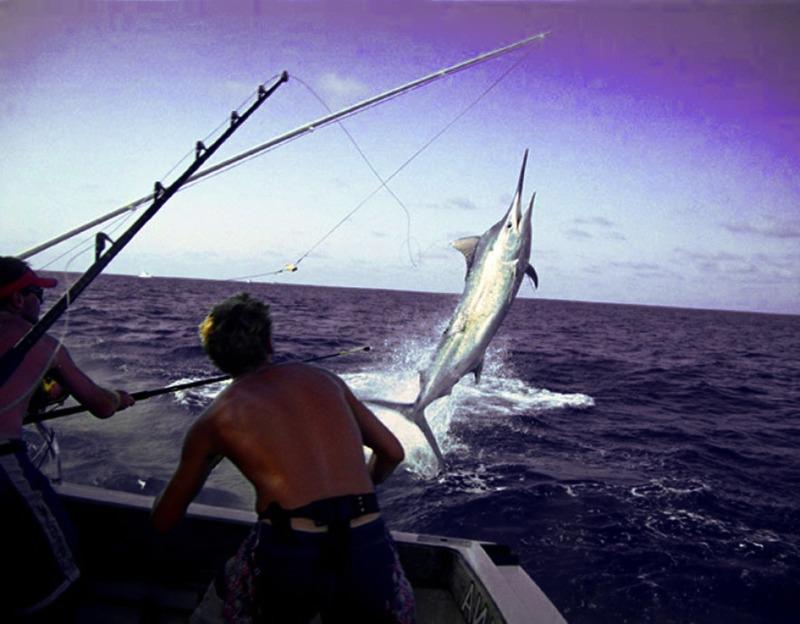«Царь-рыба»: ирландские рыбаки поймали гигантского тунца в Атлантике