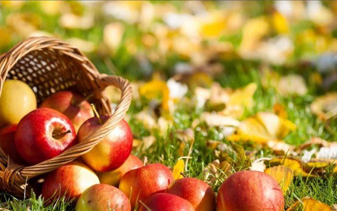 Яблоки рассыпались из корзинки осенью