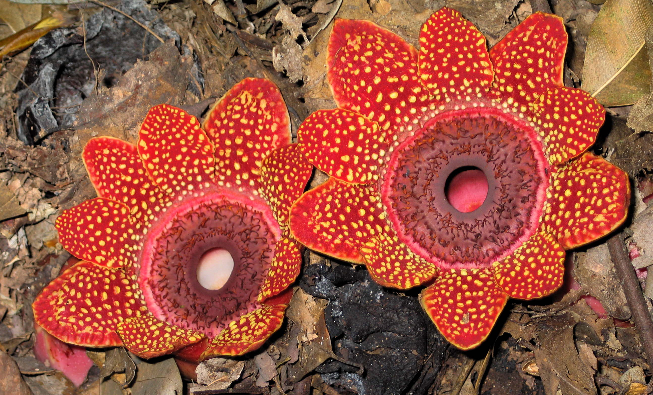 Экзотические цветы, их название и описание