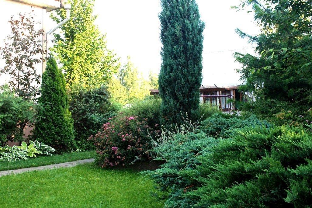 Очаровательный можжевельник для сада: виды и сорта, названия и фото