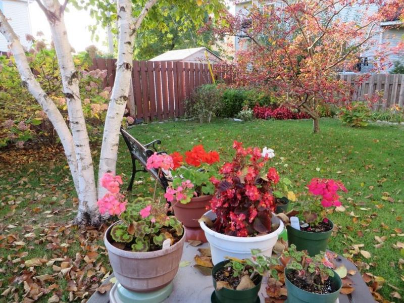 Лунный календарь садовода и огородника на октябрь 2018 года