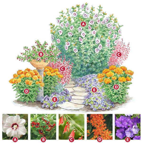 схема посадки лилий