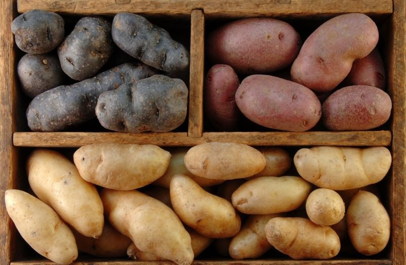Сорта картофеля в деревянной коробке с отделениями