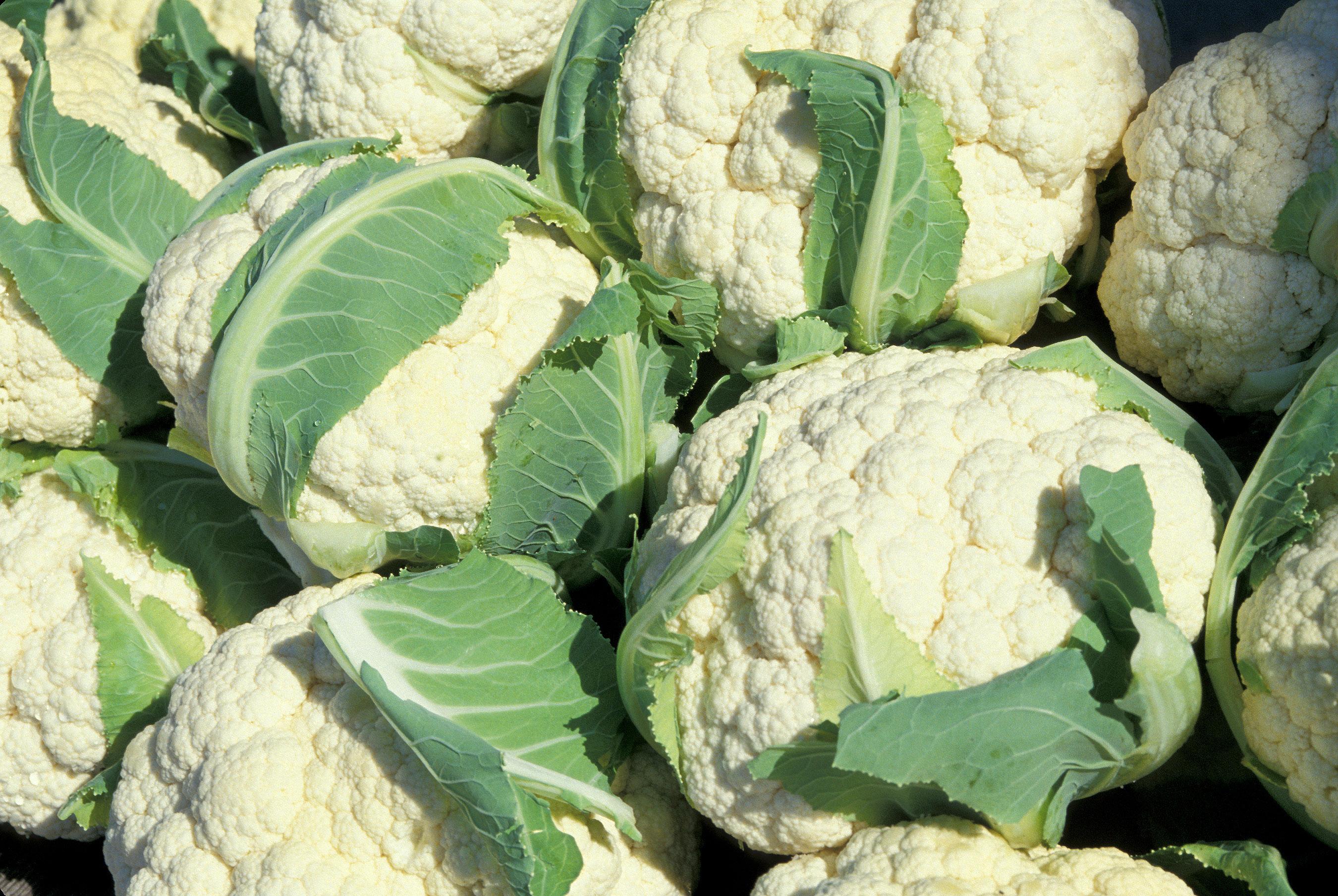 Хорошая рассада цветной капусты — залог богатого урожая