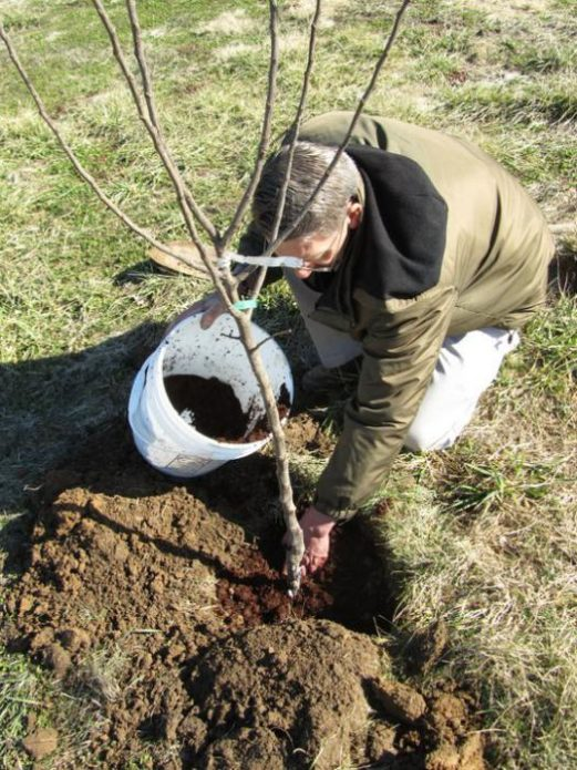 Удобрение почвы для саженцев
