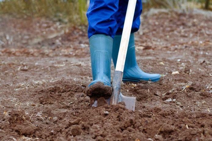 Удобрение земли перед посадкой картофеля