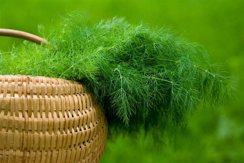 Укроп в плетеной корзинке