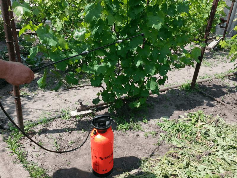 Подкормка винограда весной: чем удобрять