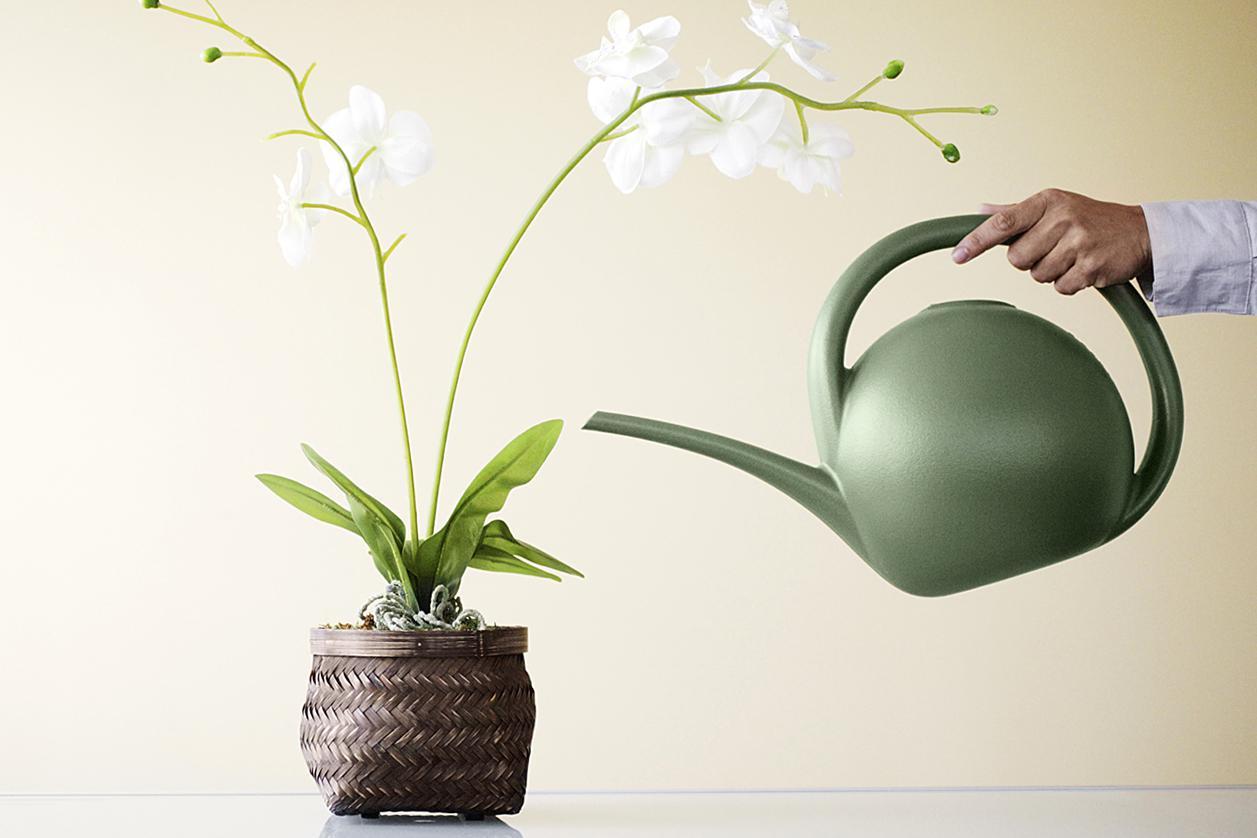 Как в домашних условиях поливать орхидею фаленопсис