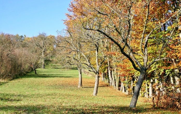 Яблони осенью