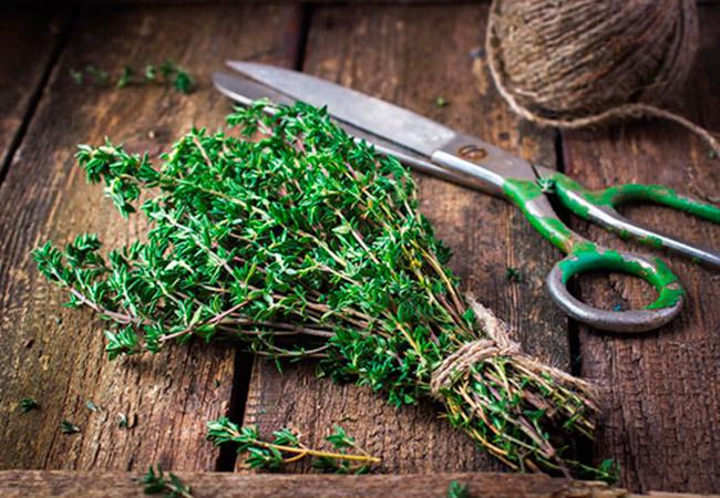 Зелень тимьяна и ножницы