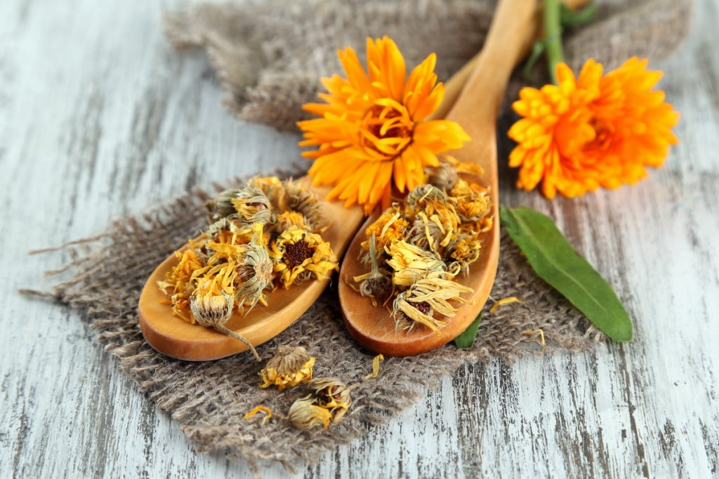 Живые и сухие цветки календулы и деревянные ложки